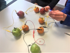 Picture of fruit circuit activity on a table, wires, fruit, zinc, .copper and LEDs, child holding it