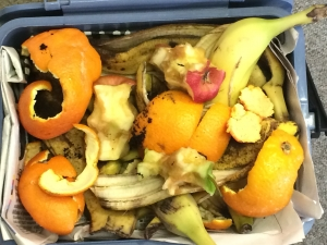 Fruit peelings and apple cores in a blue food waste bin lined with newspapers