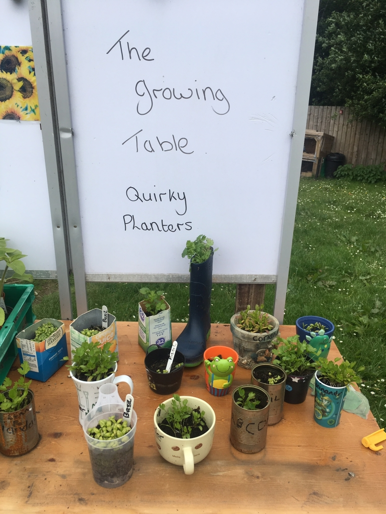 """Display of funny shaped plant pots labelled """"The growing table - Quirky Planters"""" at Holsworthy Primary School garden"""