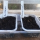 Two margarine tubs filled with compost and used as seed trays.
