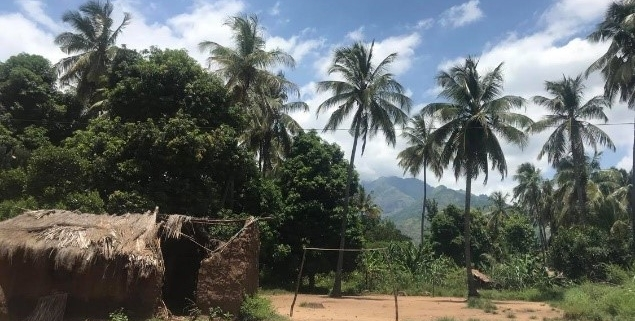 Palm trees and blue sky in rural Tanzanian village