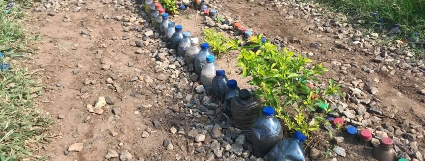 Plastic bottles upcycled into a border for a bed for plants in Tanzania